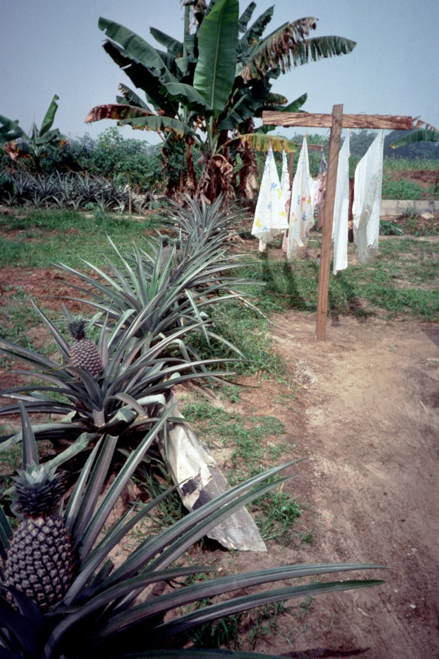 Laundry in Eket, Nigeria.  Yes, I planted those pineapples!