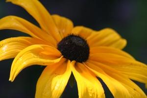 Flowers July 2008 008