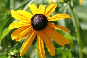 Flowers July 2008 029
