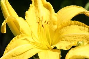 Flowers July 2008 040