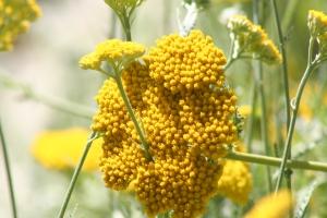 Flowers July 2008 060