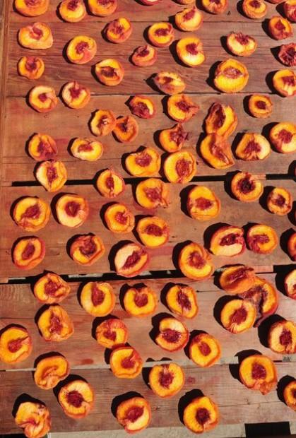 Drying Peaches 3