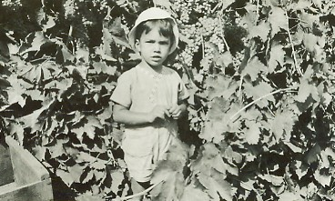 Laemmlen, Art young boy in vineyard