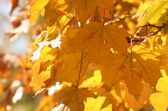 Fall, Lewis Yard (1)