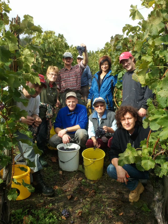 Laemmlens in vineyard 2012