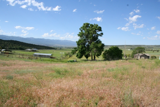 Fairview, Bushman homestead, July 2010 (43)