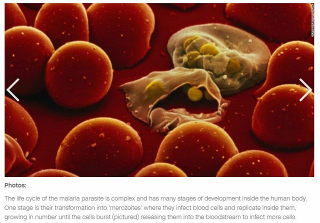 Malaria blood cells